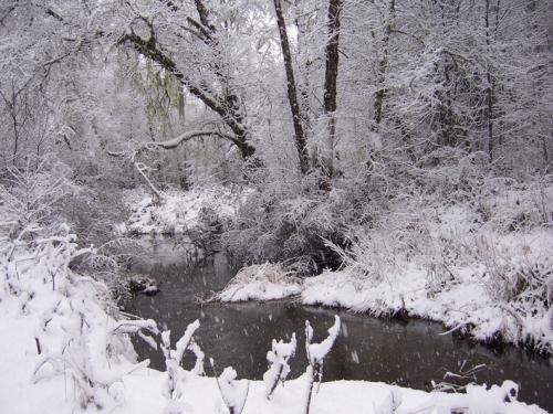 snowcreek